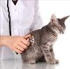 Ветеринарные клиники в Казановке